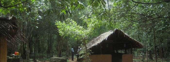 Loris Sri Lanka-7-700