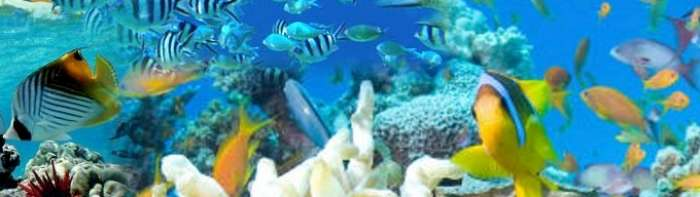 maldives adaaran rannalhi snorkeling-700