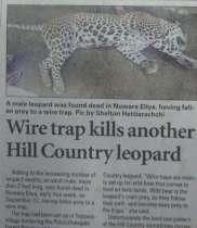 Leopard Nuwara Eliya-1-1-210